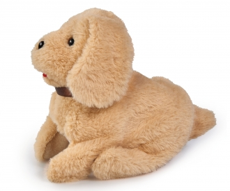 CCL Salto Puppy