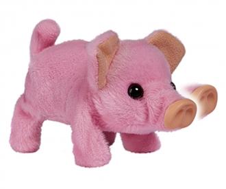 CCL Mini Pig
