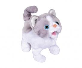 CCL Little Cat