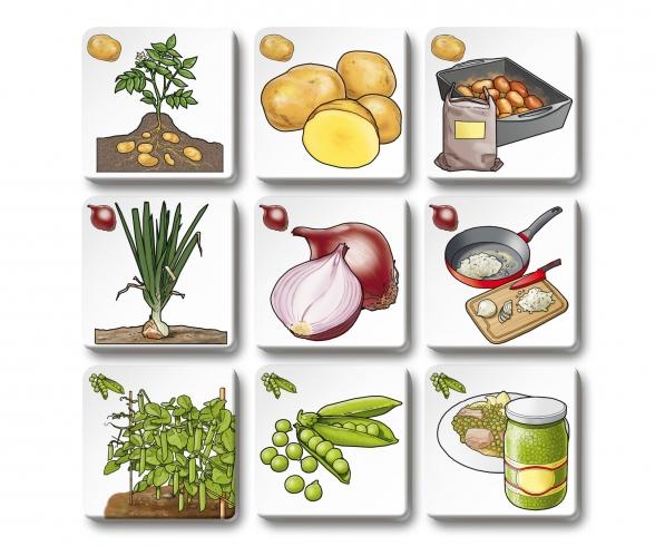 Memo Trio fruit and vegetables