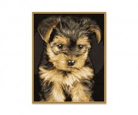 Yorkshire Puppy / Welpe Malen nach Zahlen Vorlage