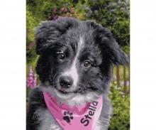 Border Collie Puppy Malen nach Zahlen