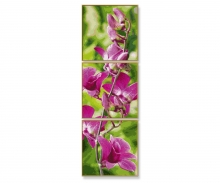 La branche d'orchidée
